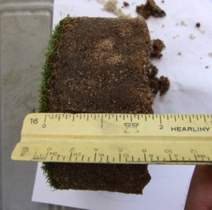 Northwood Club turf root sample after installing SubAir and Turfbreeze fans